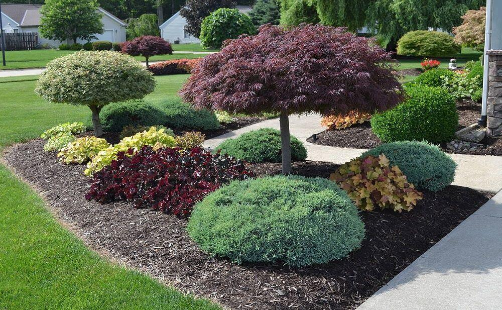 Необычные растения - наше предпочтение