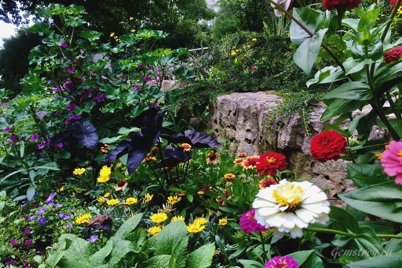Буйство цветов в альпинарии