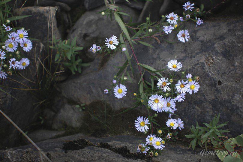 Приятные цветочки